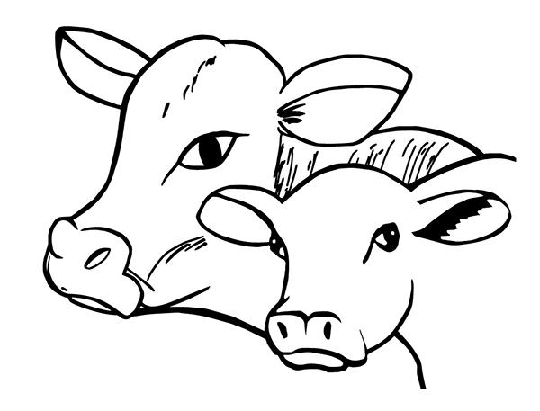 Coopérative bovine d'Abitibi